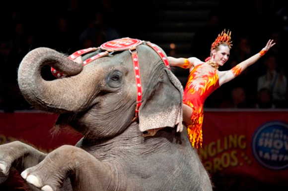 Ringling Bros. And Barnum & Bailey Circus at Wells Fargo Arena